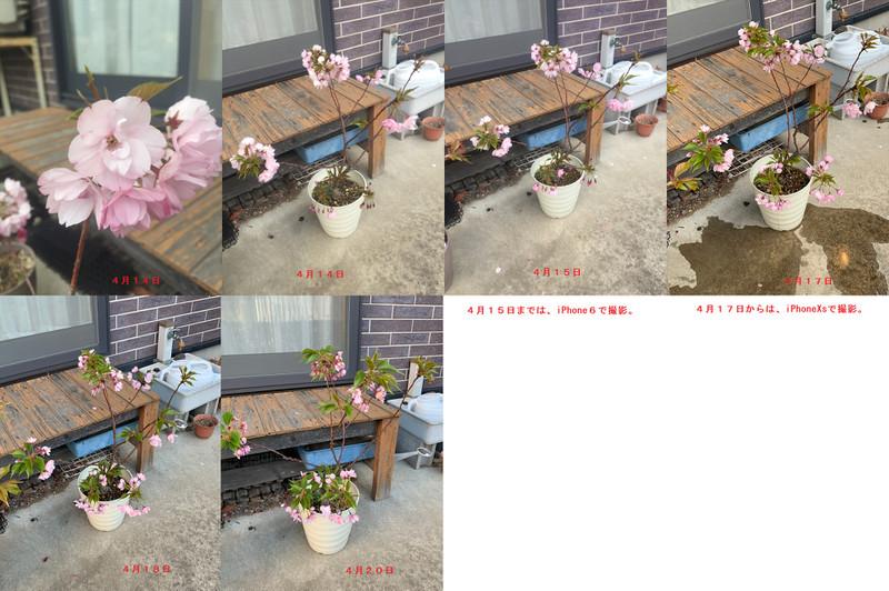 Issai_414_r